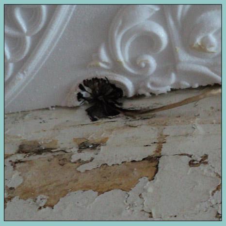 черная плесень на потолке