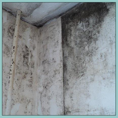 черная плесень на стенах